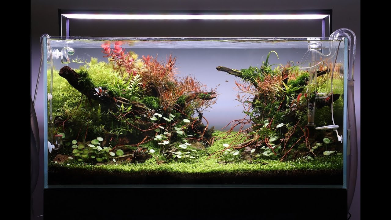 Aquascape Tutorial Step By Step 90cm Planted Aquarium Youtube