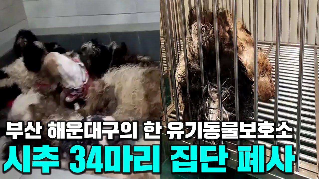부산 해운대구의 한 유기동물보호소에서 시추 34마리 집단 폐사