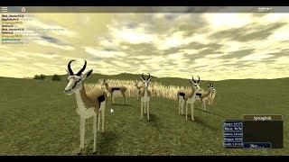 ROBLOX wild savannah springbok herd