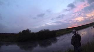 Об охоте с Русским охотничьим спаниелем в Томской области