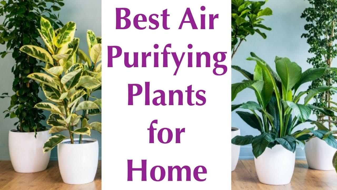 10 Best Air Purifying Indoor Plants Nasa Certified 2018