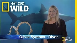 Q&A: Collective Noun for Sharks | Shark Attack Experiment Live!
