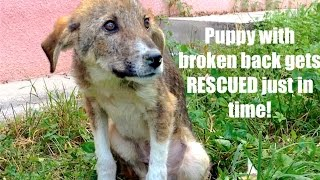SCARED HOMELESS PUPPY with BROKEN BACK from Macedonia gets on  AIRPLANE to TORONTO!