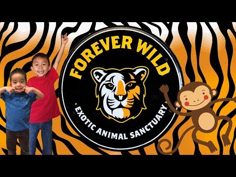 Kids Feeding Tigers at Forever Wild Exotic Animal Sanctuary in Phelan, CA: Travel with Kids