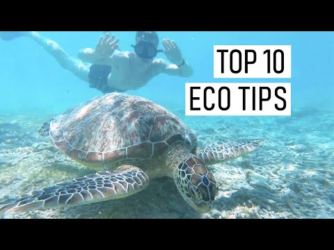HOW YOU CAN SAVE THE PLANET - Top 10 Eco-friendly Tips for Sustainable Living