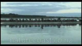 A Journey through the Nature Coast featuring Horowhenua waka