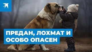 Самые опасные собаки: «черный» список правительства 2019