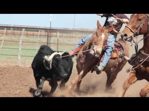 Mule Roping