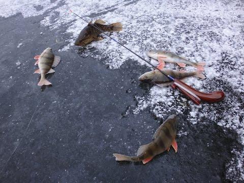зимняя рыбалка на ротана и окуня