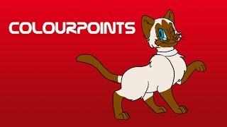 Cat Colour Genetics: Pt 4  Colourpoints