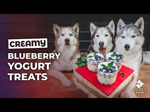Homemade Treats For Dogs DIY Easy Yogurt Summer Parfait | HUSKY SQUAD
