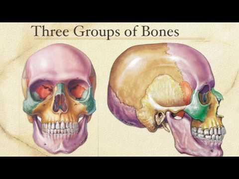 The Skull - An Introduction and Cranium