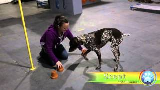 Ranger, German Short-hair Pointer Applies To Be A Champion Trick Dog