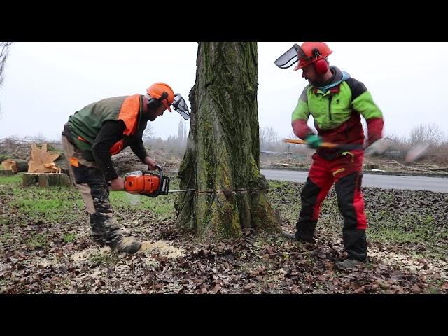 Výrub stromov na Slaneckej ceste
