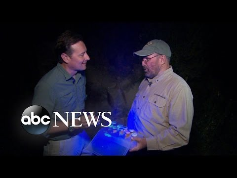 Hunting for Scorpions in Arizona