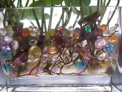 hidrogel perlas de agua