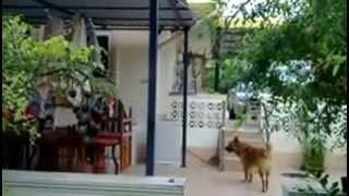 Farm House in  UdonThani  Villas for rent and sale Udon    udonmap properties .com