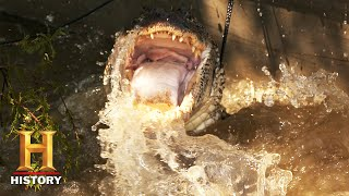 Download Swamp People: Troy and Pickles Take Down Feisty Gators On Their Last Day (Season 12) | History
