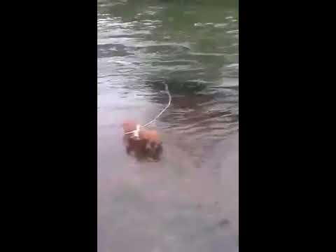 Puppy rescued from river