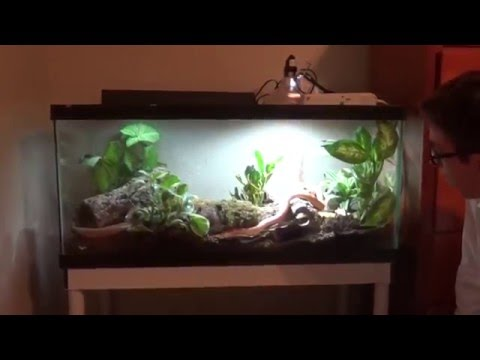 Self cleaning corn snake enclosure!