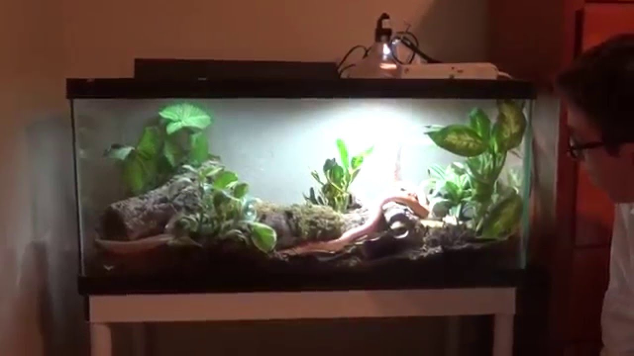 & Self cleaning corn snake enclosure! - YouTube
