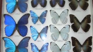Выставка Жуки и бабочки мира