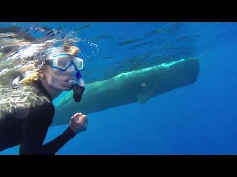 Sperm Whales Dominica 2014 2