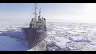 Kingdom of the Ice Bear - Incredible Polar Bears