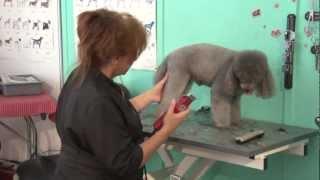 Hundefriseur Dvd Workshop, Hundepflegeschule, Groomerausbildung, Hundefriseur Ausbildung