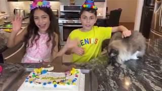 Heidi & Zidane نتظاهر اللعب صنع كعكة عيد ميلاد سعيد للحزب للقطة