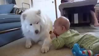 Самоед и ребенок