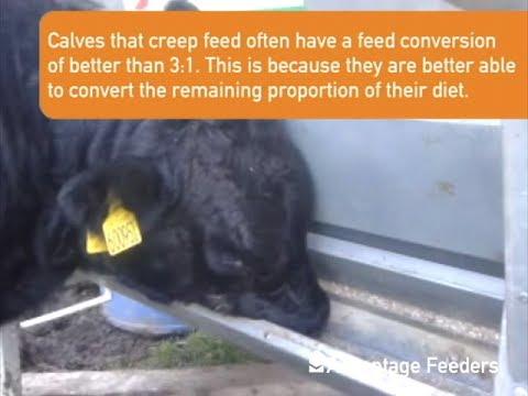 Advantage Feeders Calf Creep Gates