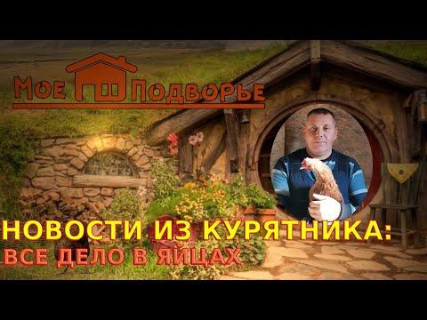 Куриные новости //