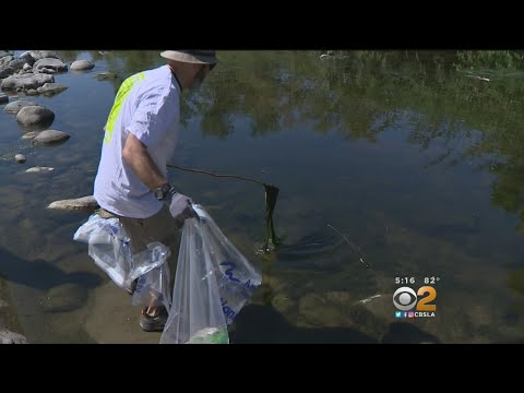 Volunteers Clean Up LA River