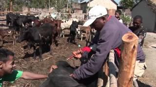 Réponses paysannes aux changements climatiques