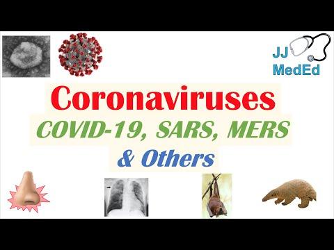 Coronaviruses | Discovery, Origins \u0026 Symptoms Of COVID-19, SARS, MERS And Other Coronaviruses