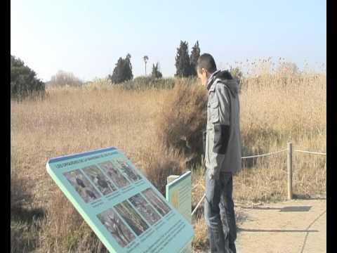 Las zonas en peligro de extinción del delta del Llobregat