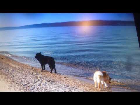 ТАЙНЫ ВОЛЬНОГО СТАРАТЕЛЯ! SEA PROSPECTING ON WINTER OLKHON, THE REAL SEARCH FOR GEMS...