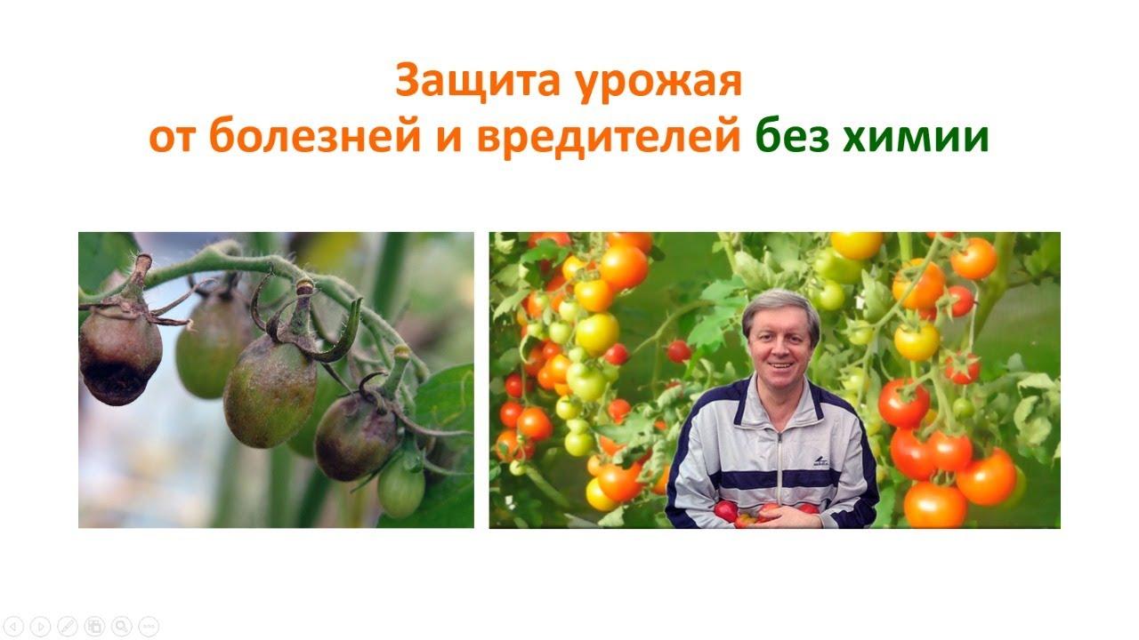 200625_Защита урожая от болезней и вредителей без химии