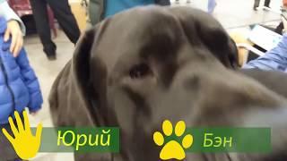 Королевский черный немецкий дог - собака для тех, кто хочет сделать мир красивее