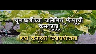 shrihari ghumare | चुनखडीच्या जमिनीत फेरसची कमतरता काय कराल उपाययोजना
