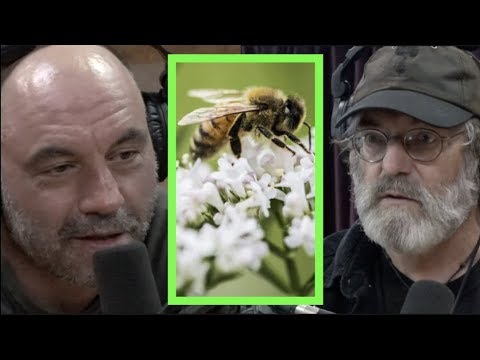How Mushrooms May Help Save the Bees w/Paul Stamets | Joe Rogan