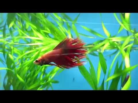 Вопрос: Какие рыбы живут без кислорода?