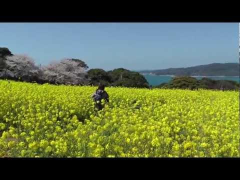 Nokonoshima Island, Fukuoka City ✿ のこのしまアイランドパーク ✿ Japan As It Truly Is