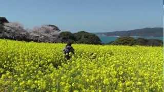 Nokonoshima Island, Fukuoka City 🌷 のこのしまアイランドパーク 🌷 Japan As It Truly Is