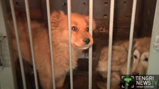 Как живут собаки в изоляторе временного содержания