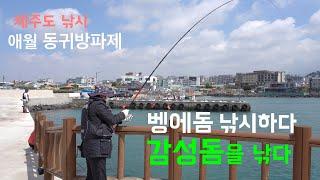 〔4K 영상〕제주도낚시-애월 동귀방파제에서 감성돔을 낚…