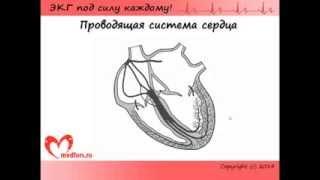 видео сделать ЭКГ сердца