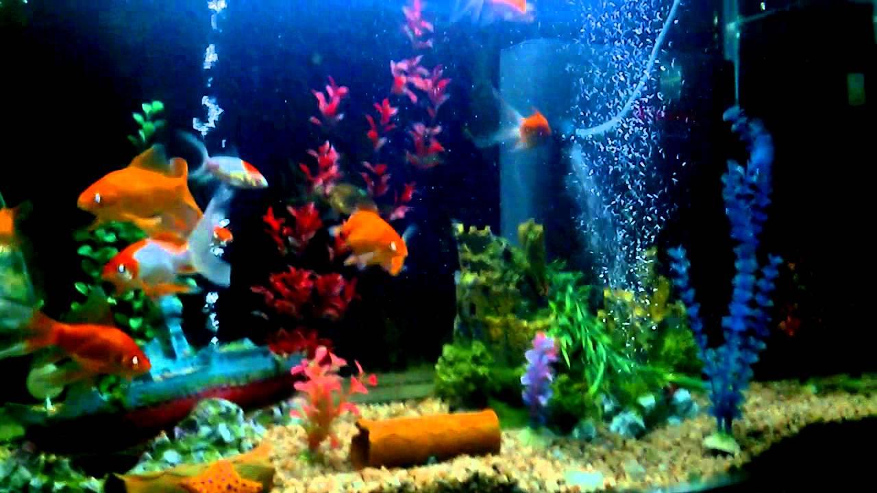 Acuario de 420 litros pecera de agua fria variedad de for Variedad de peces
