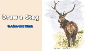 Line and wash watercolor painting tutorial -  How to draw and paint a Stag